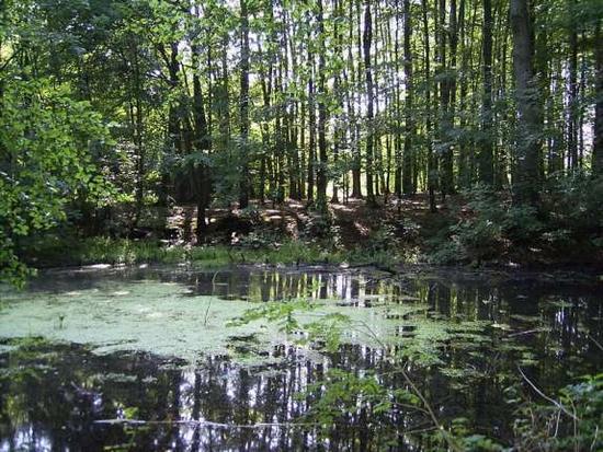 Ökologischer Wasserlehrpfad Bodenburg